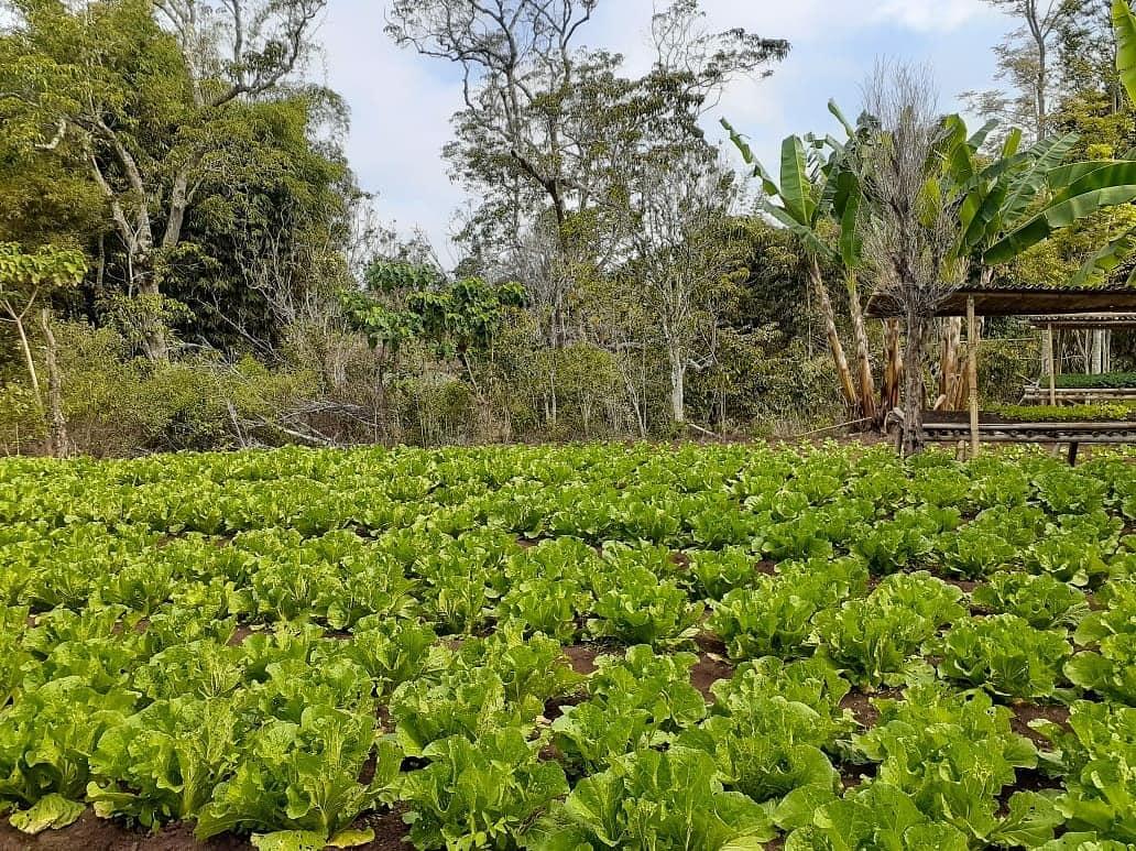 Pengembangan Pertanian Organik di Desa Penyangga Taman Nasional Kelimutu