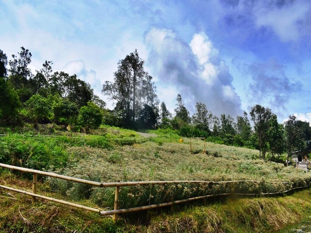 Menikmati Keindahan Bunga Edelweis dan Stroberi di Taman Nasional Kelimutu